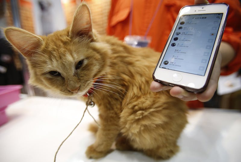 """A cat wears a """"Tsunagaru Col"""" gadget next to a smart phone displaying the connected app, at the Anicall Corp booth during the Wearable Device Technology Expo in Tokyo January 14, 2015. The gadget (""""Tsunagaru"""" means connection) for animals tracks information about pets, such as the location and other animals the pet might be interacting with, with the purpose of providing """"social networking"""" for animals. The expo runs until January 16 as a part of Japan's largest electronic exhibition expected to attract around 77,000 visitors, according to organisers. REUTERS/Yuya Shino (JAPAN - Tags: ANIMALS SOCIETY BUSINESS SCIENCE TECHNOLOGY) - RTR4LCEE"""